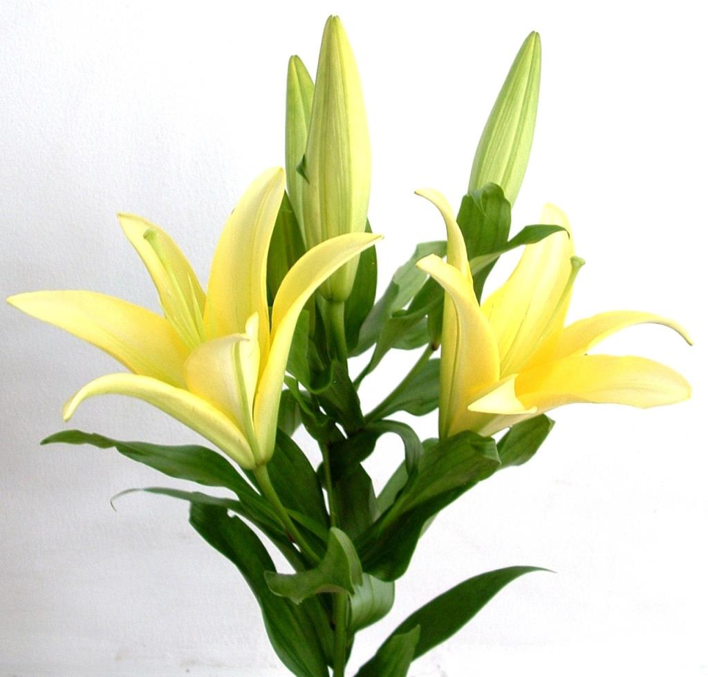 Bý quyết giữ hoa lâu hơn